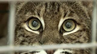 Cat House Rehab Cincinnati - Alot.com