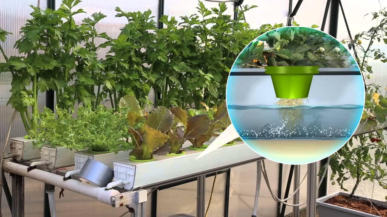 Uranus led plant growth light youtube uranus led plant growth light workwithnaturefo