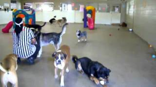 Dog Boarding Kennels - Colorado Springs