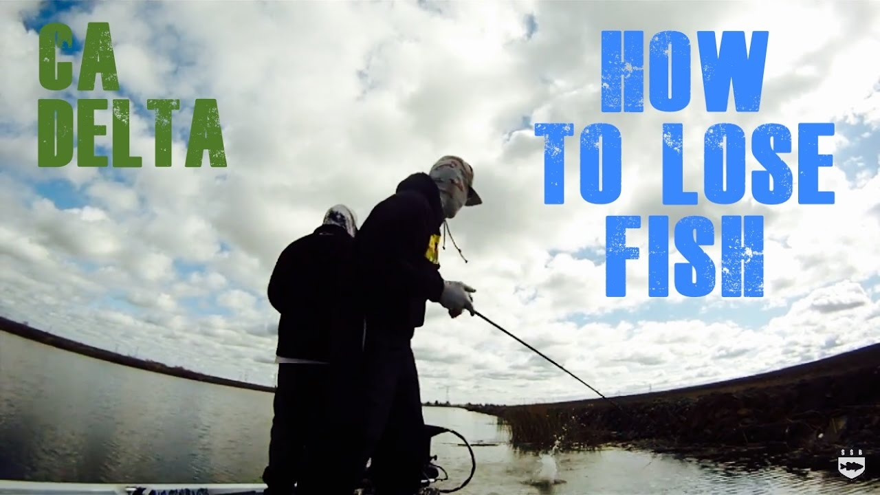 Ca delta bass fishing cast to lost losing fish during for Ca delta fishing report