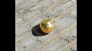 Золото из пирита. Gold from pyrite