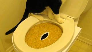 Cat Toilet training with CitiKitty Cat 04