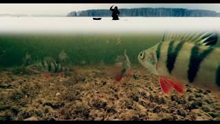 Реальные Поклевки Окуня Зимой на Балансир | Зимняя рыбалка 2017