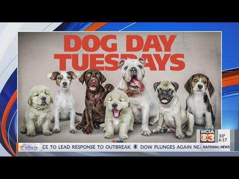 Dog Day Tuesdays