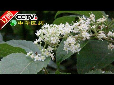《中华医药》 20170115 洪涛信箱:阻击类风湿 | CCTV-4