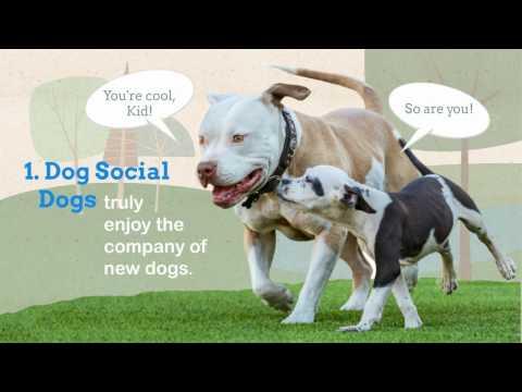 Dog Politics! Dog/Dog Tolerance Levels.
