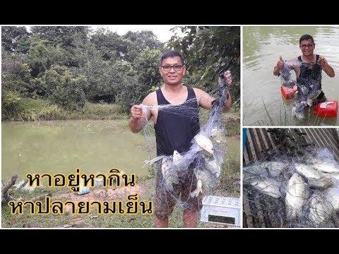 ใส่มองหาปลา