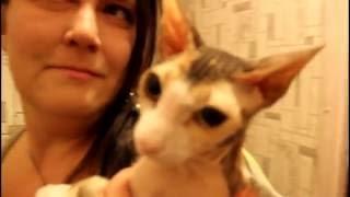 Как выбрать запах который не нравиться кошке