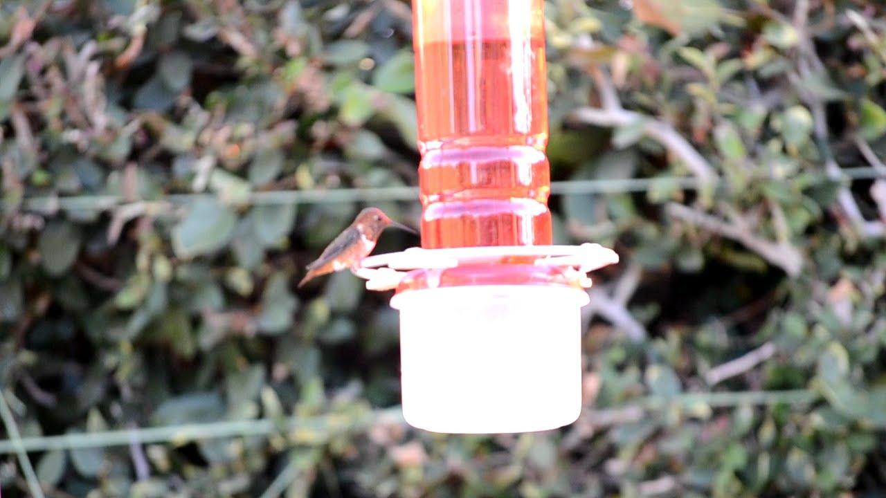 Como hacer un bebedero para colibr es youtube for Para desarrollar un parque ajardinado