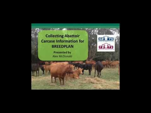 Collecting Abattoir Carcase Information for BREEDPLAN