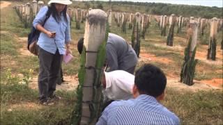 Soil sampling at Mr Hao's dragon fruit farm in Binh Thuan Province, Vietnam