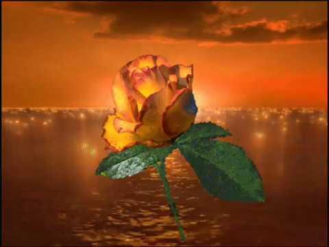 Paul Abraham Une Fleur Gifs Animes Youtube