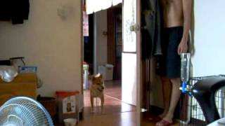 飼い主さんと隠れんぼ。柴犬達の素直な反応がカワイイ!