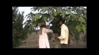 success story of papaya cultivation Hindi Access Madhyapradesh