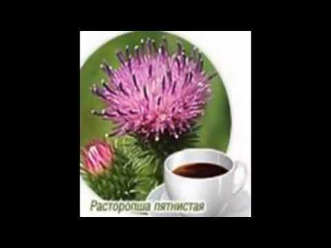 Расторопша: лечение печени, гепатита, применение для