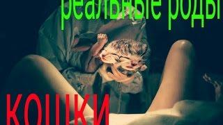 Реальные роды кошки . Первые дни жизни котят . Кот присутствует на родах и поддерживает! 11.09.16