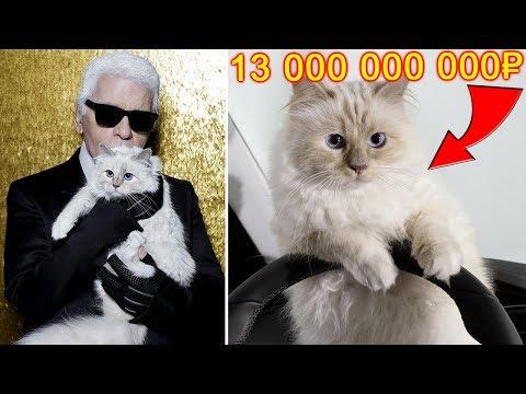 Эта кошка унаследовала 13 миллиардов рублей