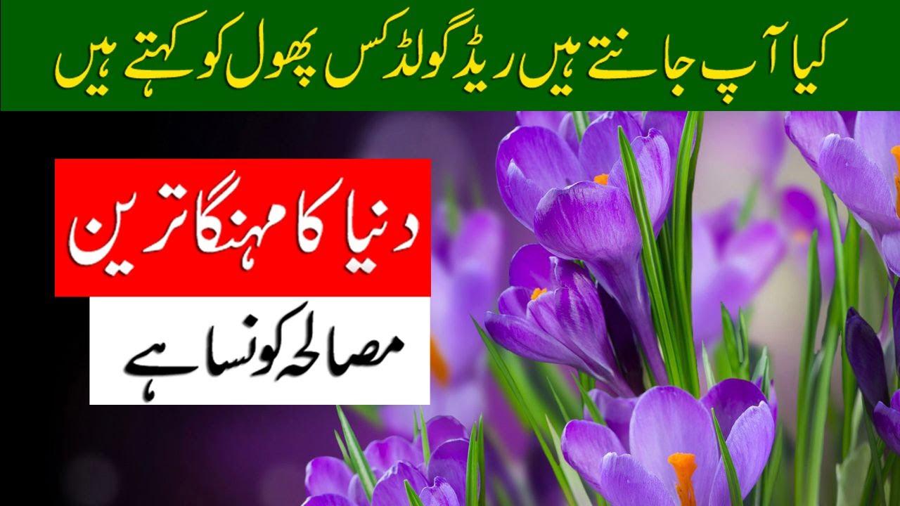 Why Saffron World's Most Expensive Spice | Zafran (Saffron) Kaya Hai | Zafran Documentary by Fmc Tv