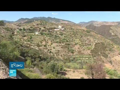 المغرب: القنب الهندي المحلي يواجه منافسة قوية مع بذور هجينة قادمة من مختبرات أوروبا  - 11:54-2019 / 10 / 11