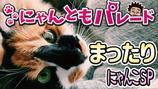 【猫動画】まったりにゃんこSP〜にゃんともパレード〜