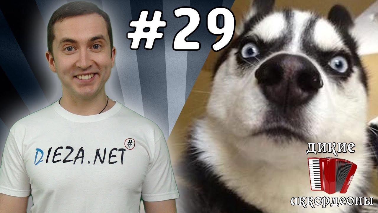 Какие умные собаки / Smart Dogs