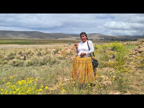 Visitando Chinchaya Pocoata grande y Maquelaya La Paz - Bolivia | CHOLITA ISABEL