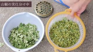 山椒の実から粉山椒をガチで作る