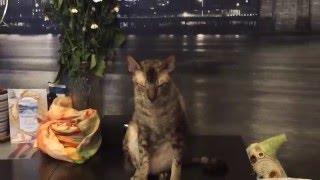 Подмигивающий кот