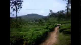Tea Plantations in Wayanad on the Way to Pookkodu Lake