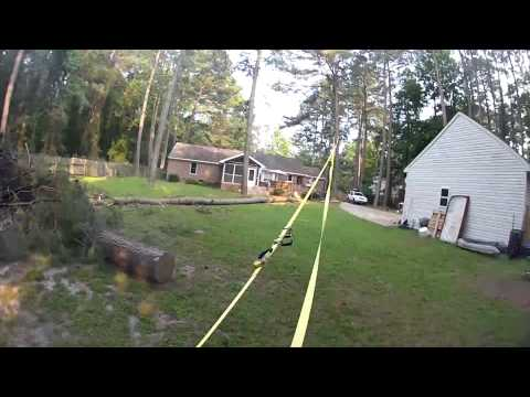 Pulling down a tree with a strap