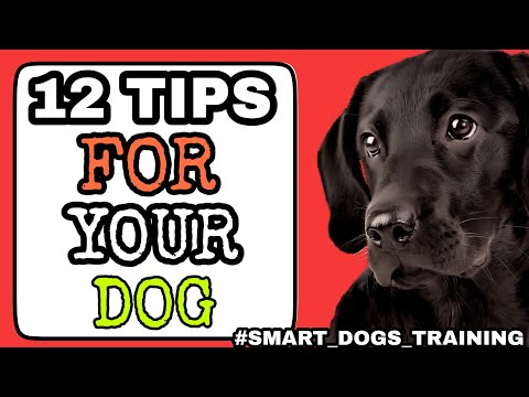 12 tips Apke Dog Ke Liye - dog diet , vaccination , behavior problems . etc || SMART DOGS TRAINING||
