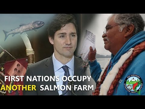 First Nations occupy second Salmon Farm sending a strong message to the governement