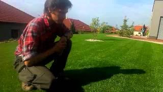 Luxusní setý trávník čtvrt roku po výsevu