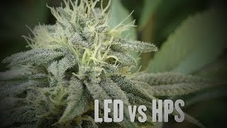LED VS HPS  Comparison