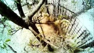 """Hermosa nevada llamada """"Damas Blancas"""" by Leon Greco y musica de Martin Van"""