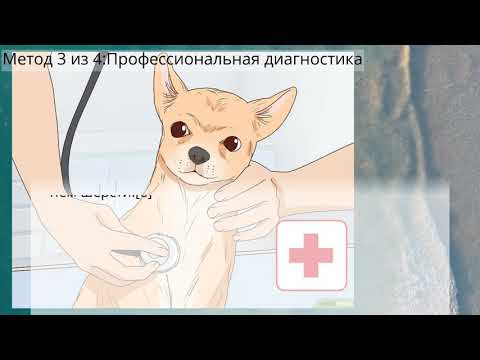 Вопрос: Как определить, что собака беременна?