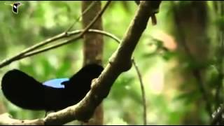 kadir şahin müthiş kuşlar belgesel