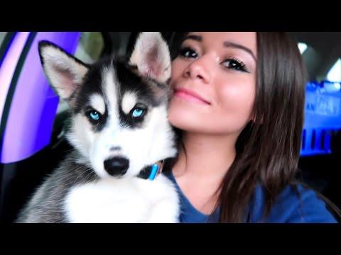 I GOT A PUPPY! | HeyItsSarai
