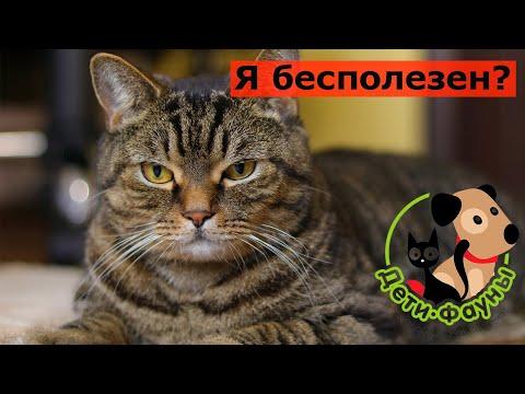 Какая польза от кошки для человека?