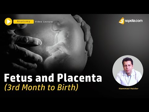 Fetus And Placenta | 3rd Month To Birth | Embryology Lecture | V-Learning | Sqadia.com