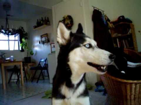 "Mishka Says ""I'm Not Crazy""! - 2004"