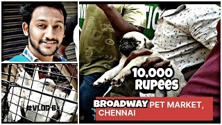 Broadway pet market - Maskanchavady  kozhi market #trending | #maskanchavady