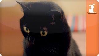 Cat Connection - Black Cats