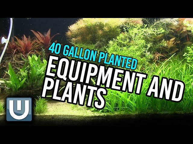 Hardscape, Plants and Equipment   40g Soil Tank   Part 3