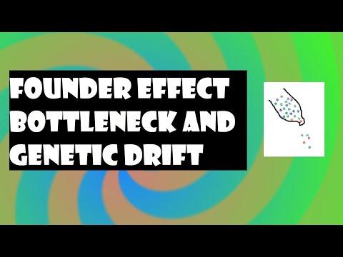 Sample Essay on Genetic Drift