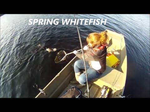 Backwoods Whitefish Fishing Ontario