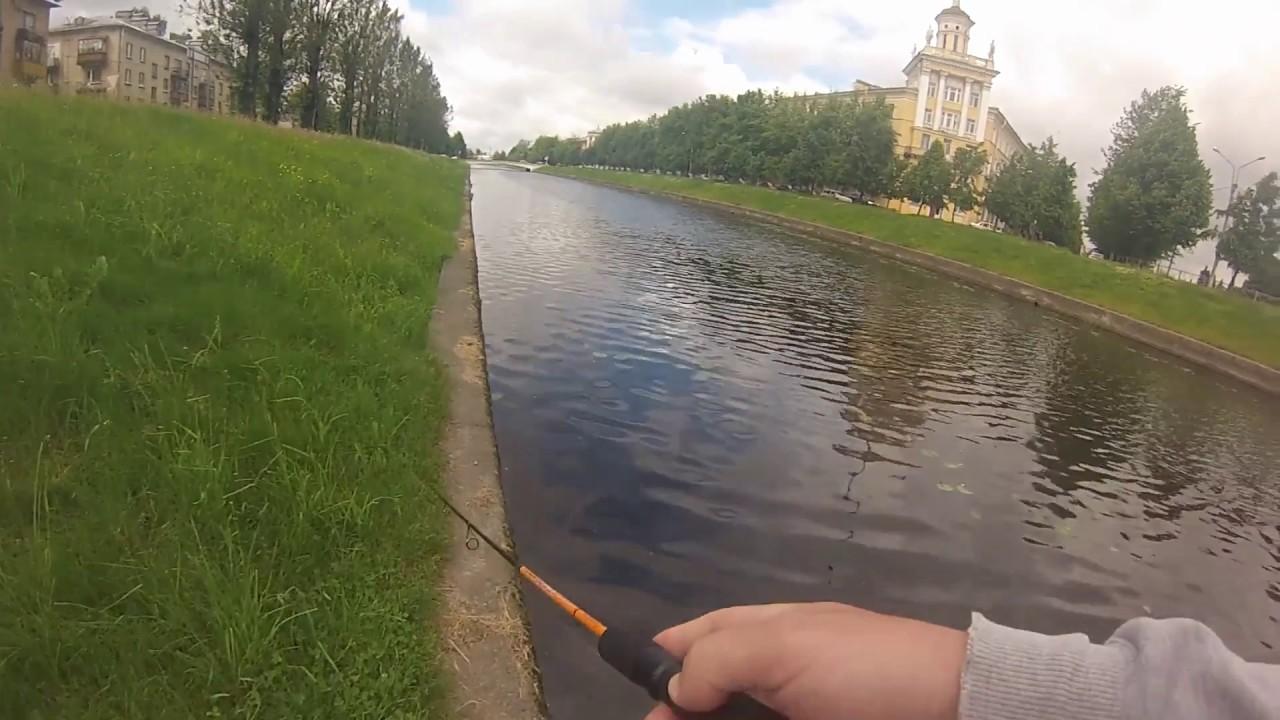 речка черная в большой ижоре рыбалка