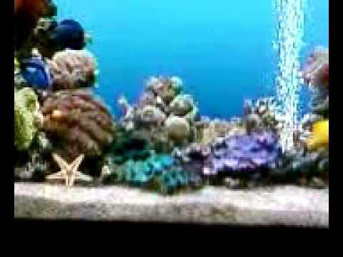 Moving Fish Aquarium As Desktop Wallpaper Youtube