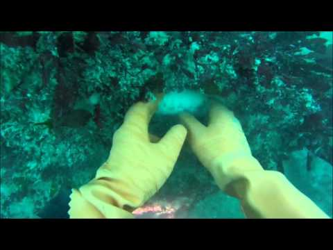 Dive Guernsey - Wreck Series - Forth - With Olly - 5/6/15