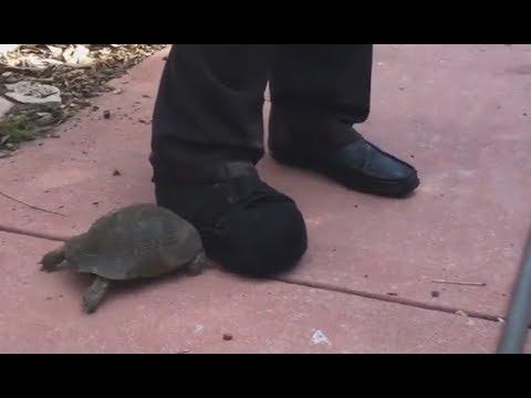 Tortoise vs. Shoe